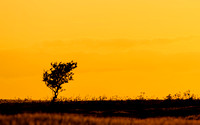 Sunset Tree 2